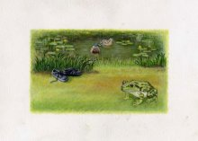 pond-scene400