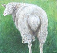 maple-farm-sheep-copy400