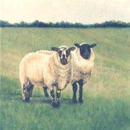 two-sheep32906