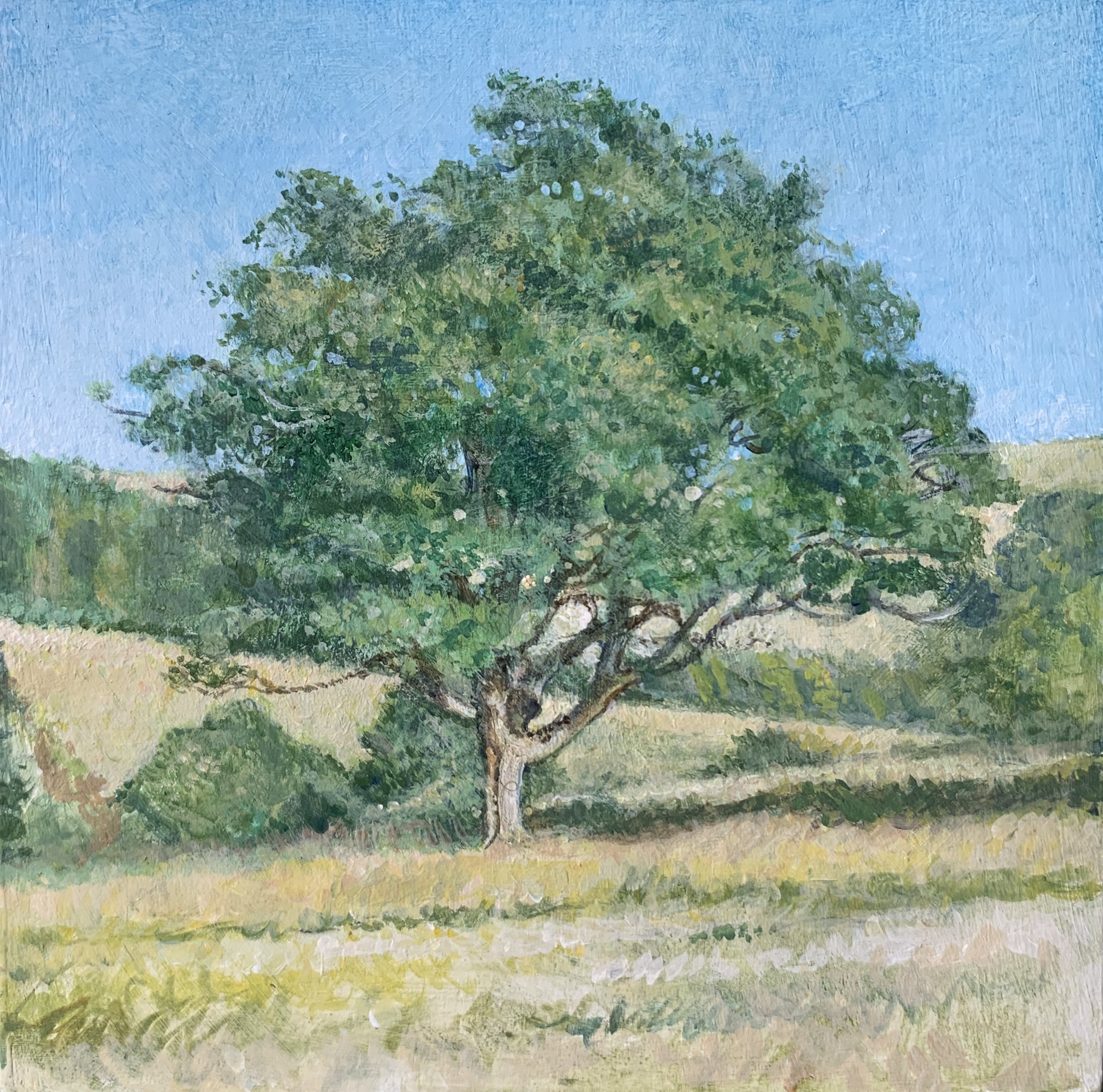 """Stanmer Park 6""""x6"""""""