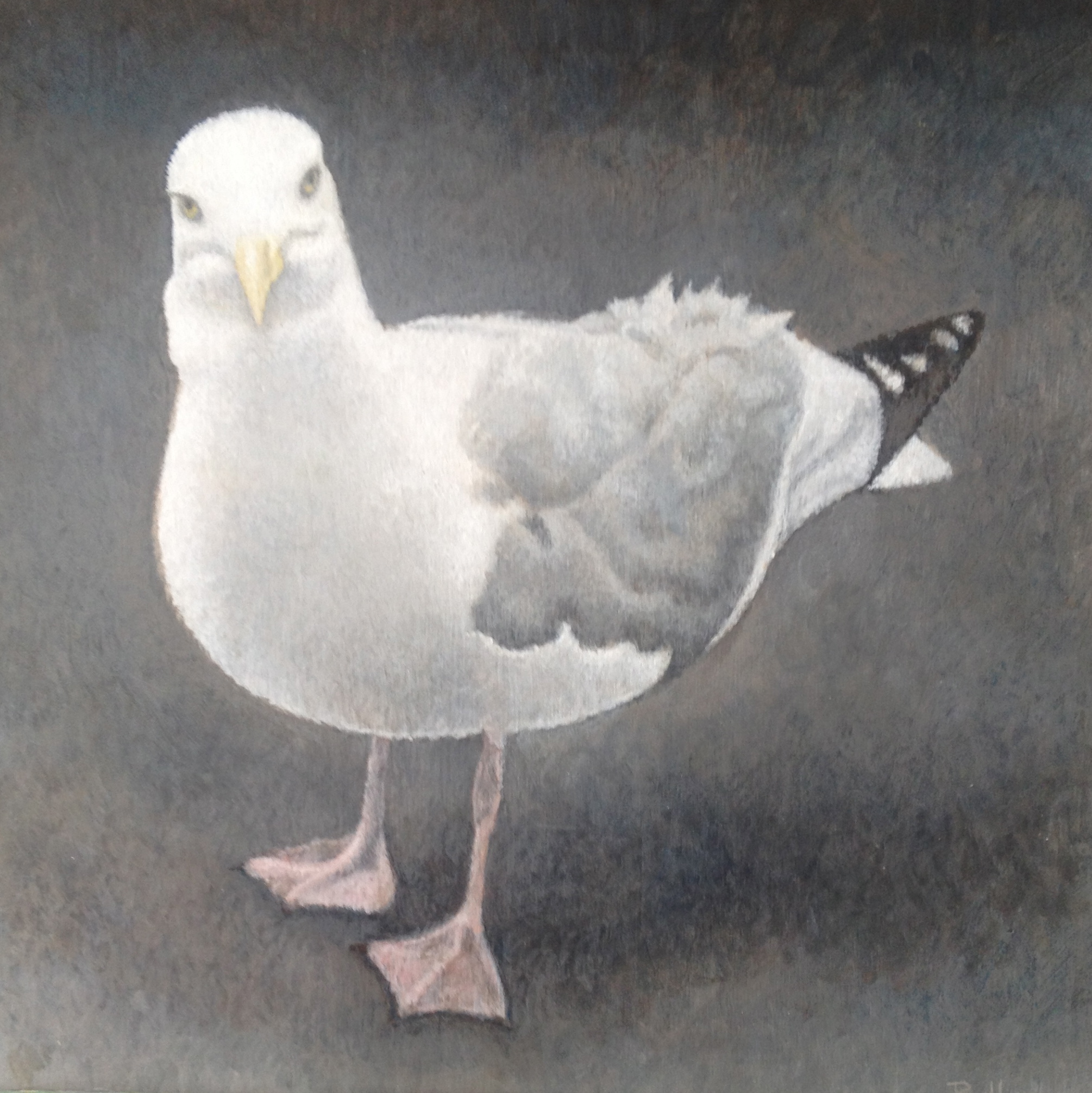 "Seagull at the Front Door.8""x8"".Acrylic on board."