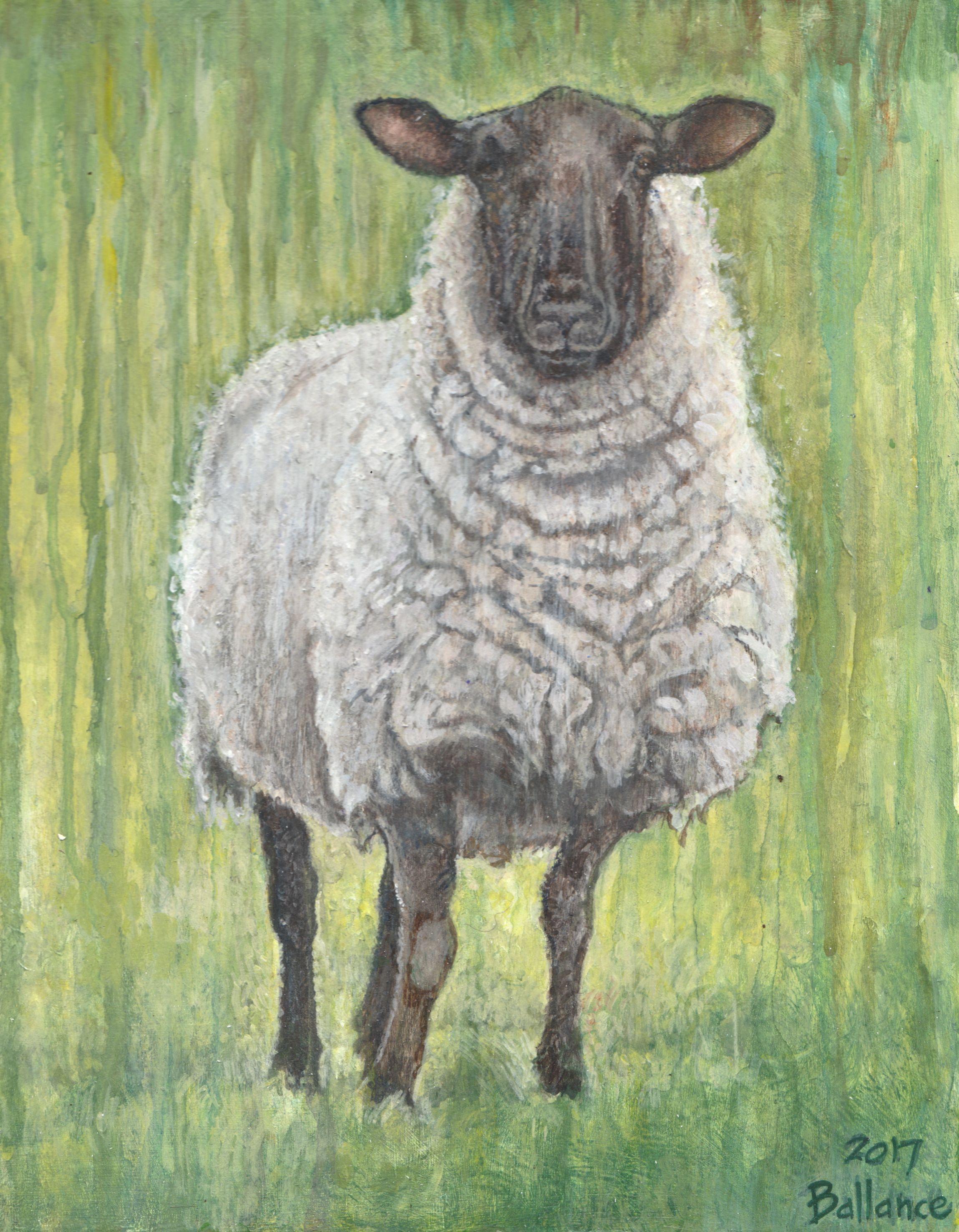 """Rainy Day Sheep. 8""""x10"""" Acrylic on board."""